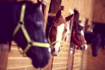 Equine Insurance Solutions